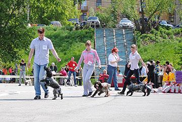 неправильное передвижение собак на ринге