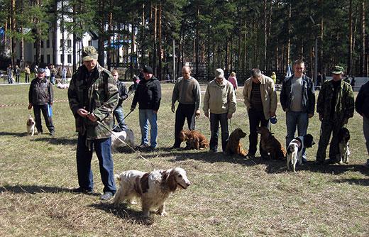 русские охотничьи спаниели на выставке рорс